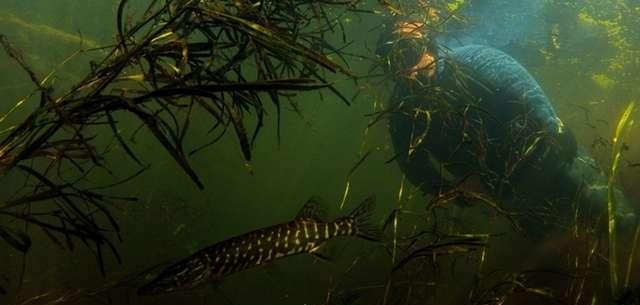 Zagrożenia występujące podczas nurkowania na wstrzymanym oddechu - część trzecia - full image