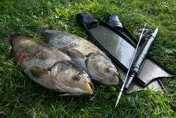 Selektywne odstrzały ryb kuszą