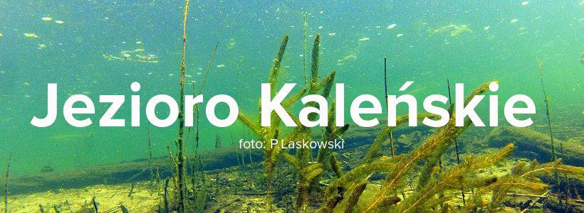 https://m.nurkowa.pl/2016/06/orig/kalenskie-button-1389.jpg