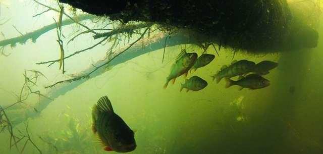 Podwodna pomoc dla rybaków i wędkarzy - full image
