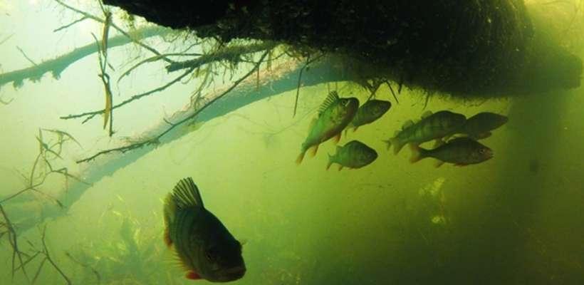 Podwodna pomoc dla rybaków i wędkarzy