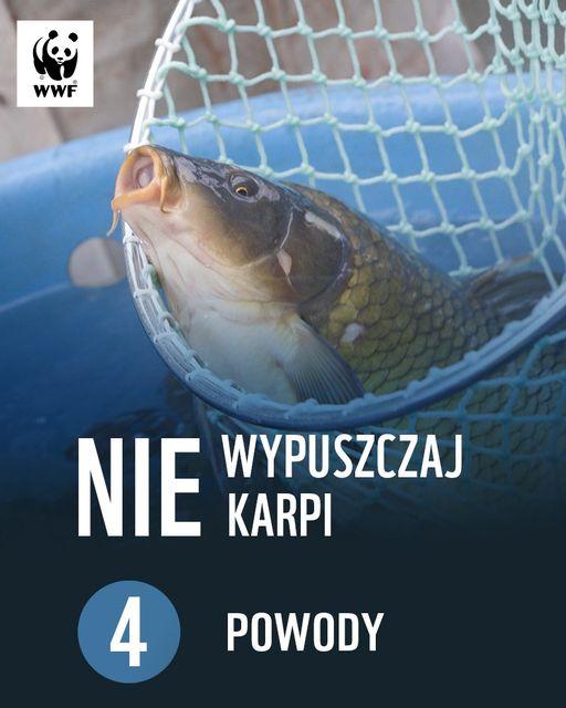 https://m.nurkowa.pl/2020/12/orig/np-ukp-04-2183.jpg