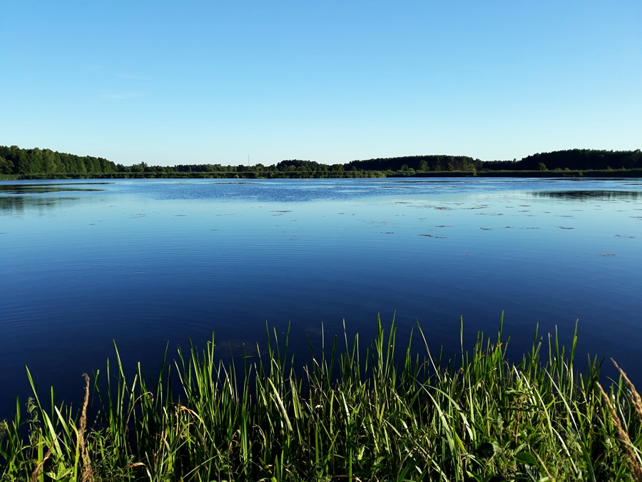 https://m.nurkowa.pl/2021/07/orig/fot-4-staw-hodowlany-fot-anna-maria-labecka-2251.jpg