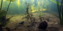 Szczeżuja chińska – obcy gatunek małża w wodach śródlądowych. Znajdziesz – informuj!